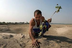 მამაკაცი, რომელმაც კუნძულზე ტყე მარტომ გააშენა