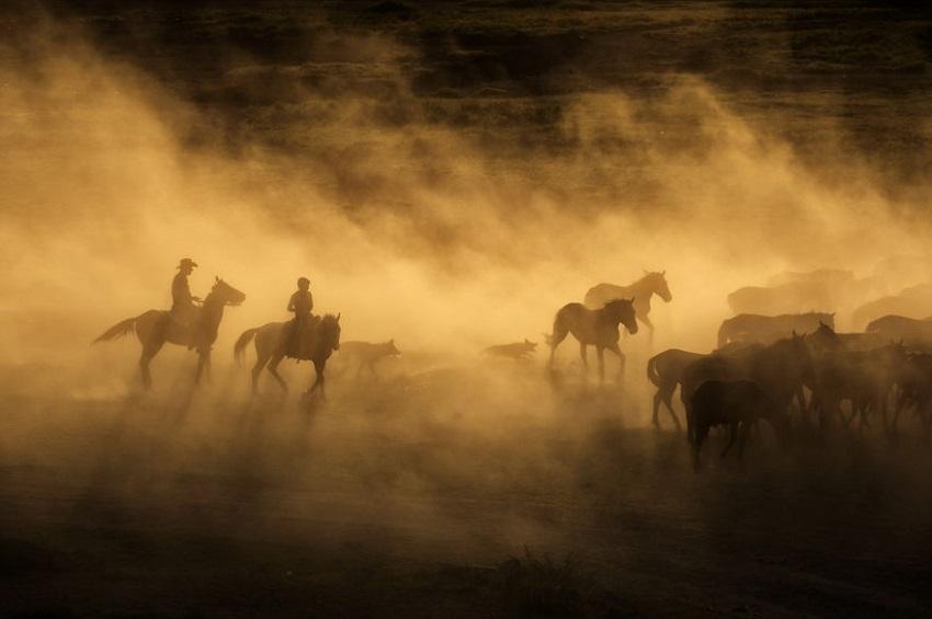 კაპადოკიის ველური ცხენები