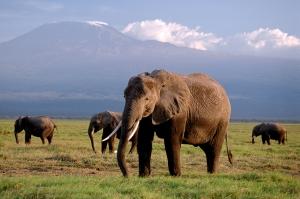 სპილოების გადასარჩენად ბრიტანეთში სპილოს ძვლის ნაკეთობების გაყიდვა აიკრძალება