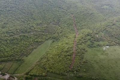 კასპის რაიონის სოფელ გორაკასთან ოკუპანტები ტყეს ჩეხავენ
