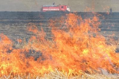 შირაქში ხანძრის შედეგად 70 ჰექტრამდე ყანა განადგურდა