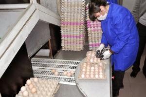 დახოცილი ქათმით და კვერცხით გარემოს დანაგვიანებისთვის კომპანია 1000 ლარით დაჯარიმდა