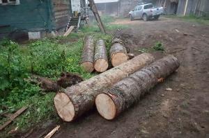 ივნისში ხე-ტყის უკანონო მოპოვებისა და ტრანსპორტირების 371 ფაქტი გამოვლინდა