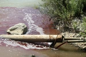 ახალციხის სასაკლაოზე დაკლული ცხვრის სისხლს მდინარე ფოცხოვში ღვრიან