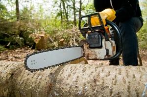რა შეიცვალა ტყით სარგებლობის წესებში