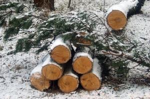 იანვარში ხე-ტყის უკანონო ჭრისა და ტრანსპორტირების 420 ფაქტი გამოავლინეს