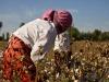 აზერბაიჯანში ბამბის მინდვრებში ასზე მეტი ადამიანი მოიწამლა