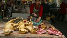 იულინის ფესტივალზე ძაღლის ხორცის გაყიდვა აიკრძალება