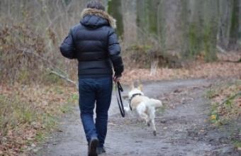 ჩხოროწყუს საკრებულომ ნარკოდამოკიდებულებს კატებისა და ძაღლების ყოლა აუკრძალა