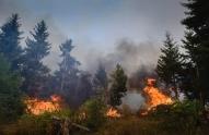 თუშეთში, სოფელ ხახაბოსთან ტყე იწვის, ხანძარია ჯუთაშიც